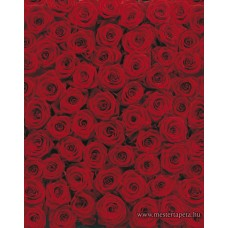 Vörös rózsák poszter 4-077 ingyenes szállítással