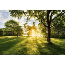 Fák árnyéka poszter 8-743 ingyenes szállítással