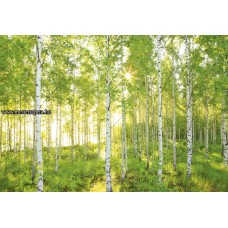 Erdő poszter 8-519 ingyenes szállítással