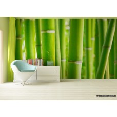 Bambusz poszter FTS 0170