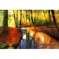 XXL Színes erdő poszter 470303