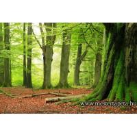 XXL Zöld erdő poszter 470309
