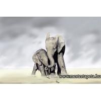 XXL Elefántok poszter 470317