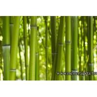 XXL Bambuszok poszter 470322