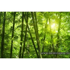 XXL Bambuszerdő poszter 470325
