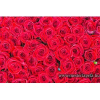 XXL Vörös rózsák poszter 470357