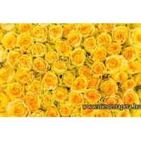 XXL Sárga rózsák poszter 470358