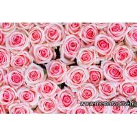 XXL Pink rózsák poszter 470359